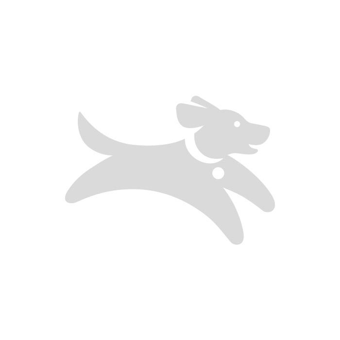 Doodley Dogs Black Plain Nylon Collar