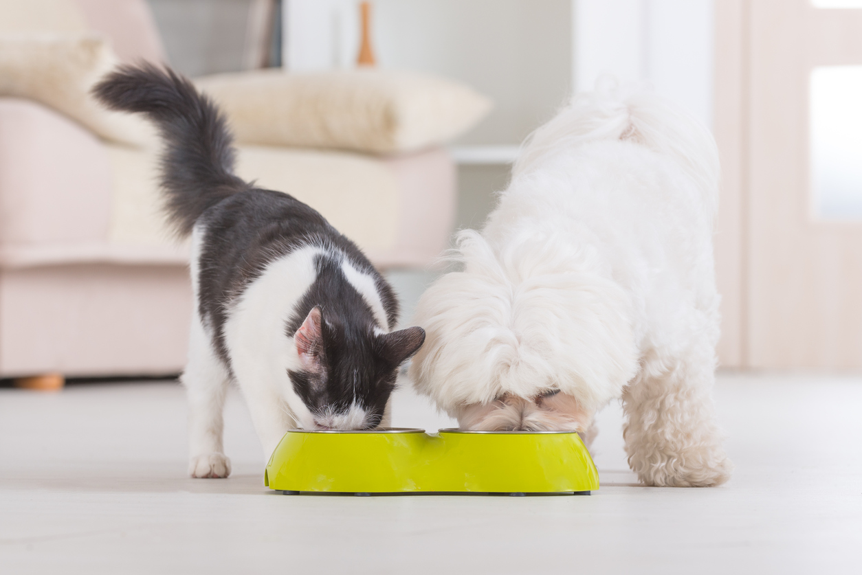 The low-down on good pet nutrition