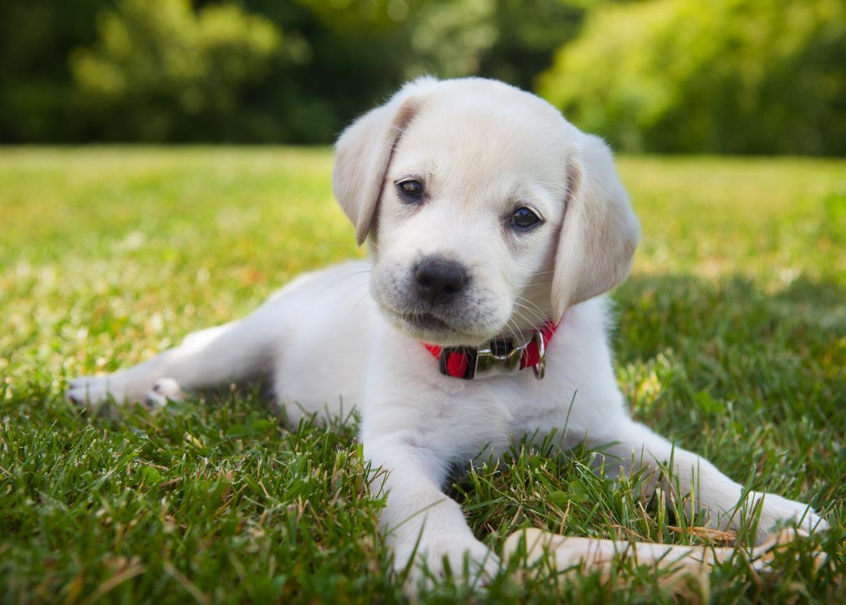 Are you puppy prepared?