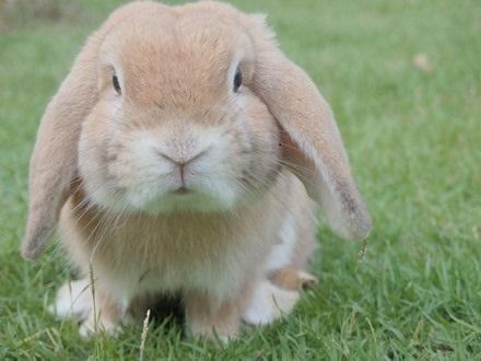 Love your bunnies