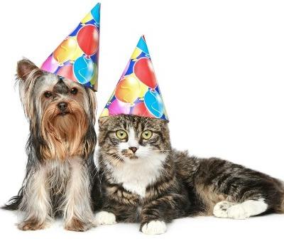 Pets Corner is 50!