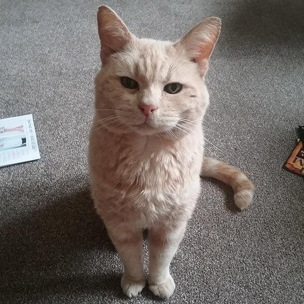 Pets Corner Customer Testimonials
