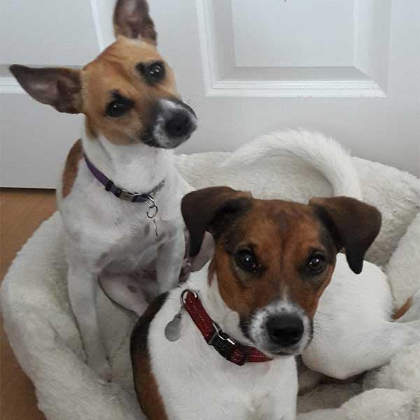 Bonnie & Dougal