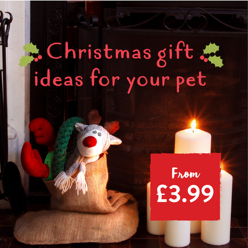 Treat Your Pet This Christmas