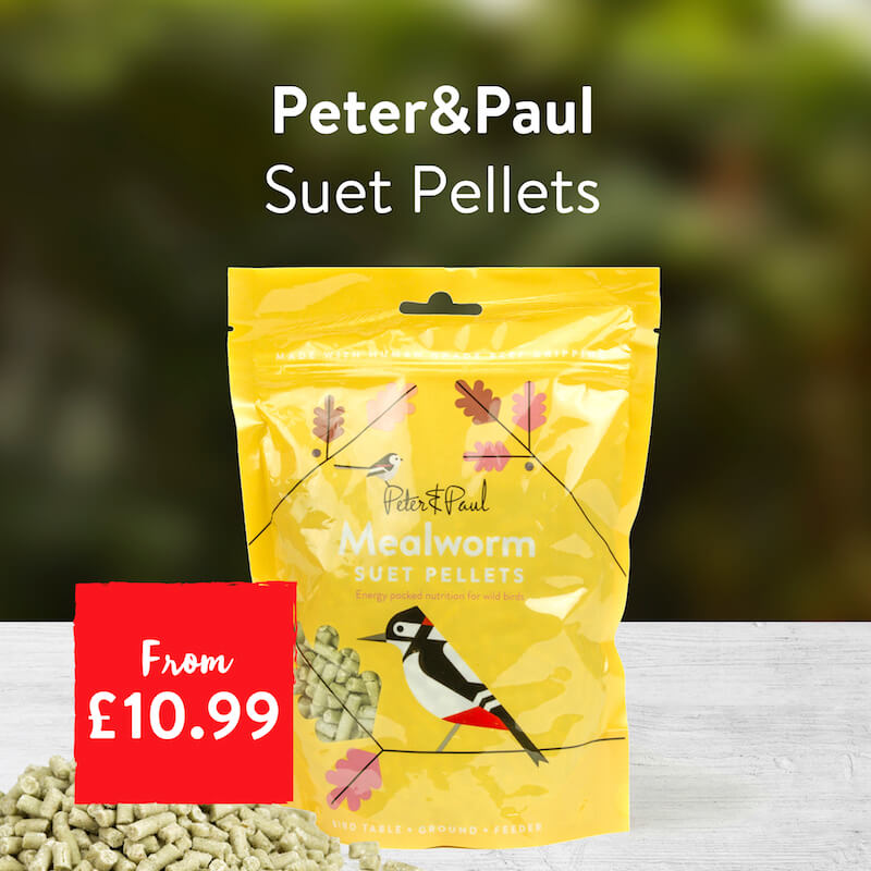 Peter & Paul Suet Pellets