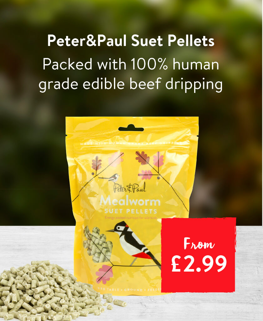 Peter & Paul Suet Pellets