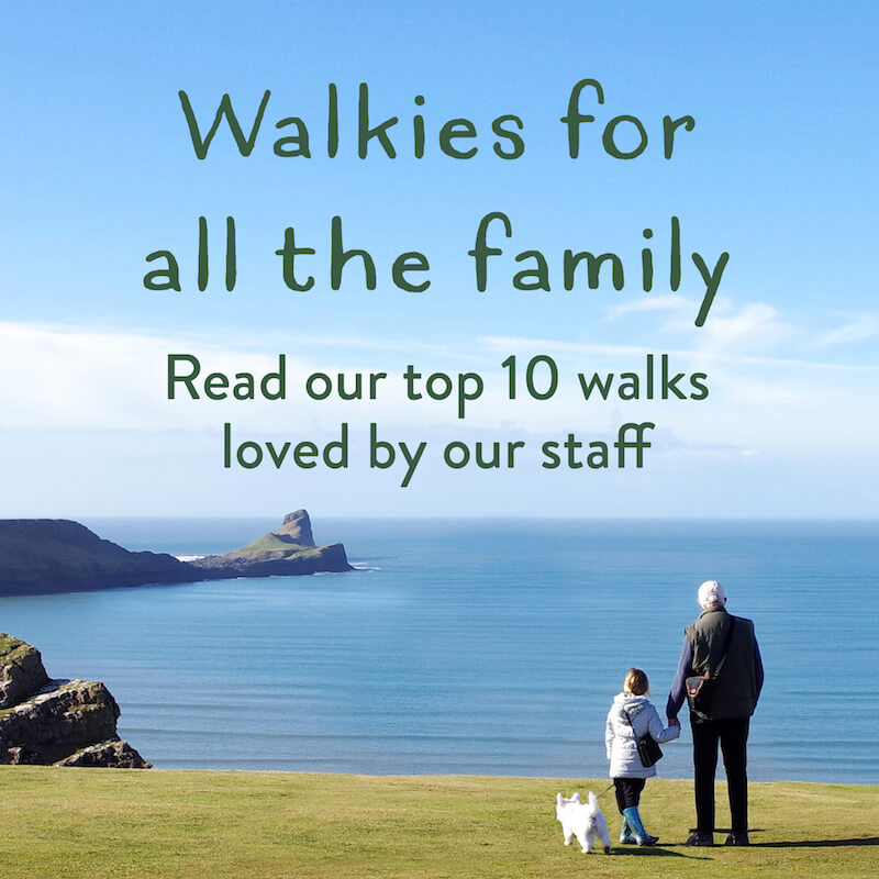 Top 10 Staff Dog Walks