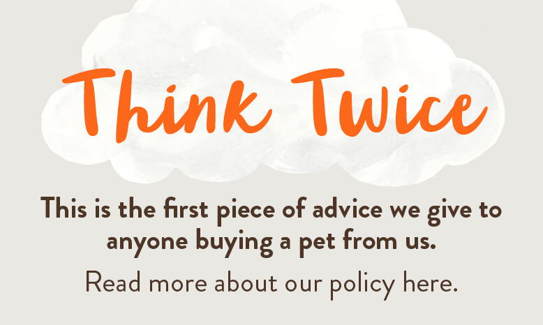 Think Twice. This is the first piece of advice we give to anyone buying a pet from us.