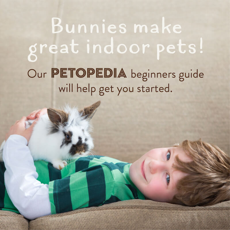 Petopedia House Rabbits