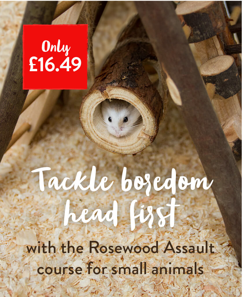 Tackle boredom head first with the Rosewood Assault course for small animals