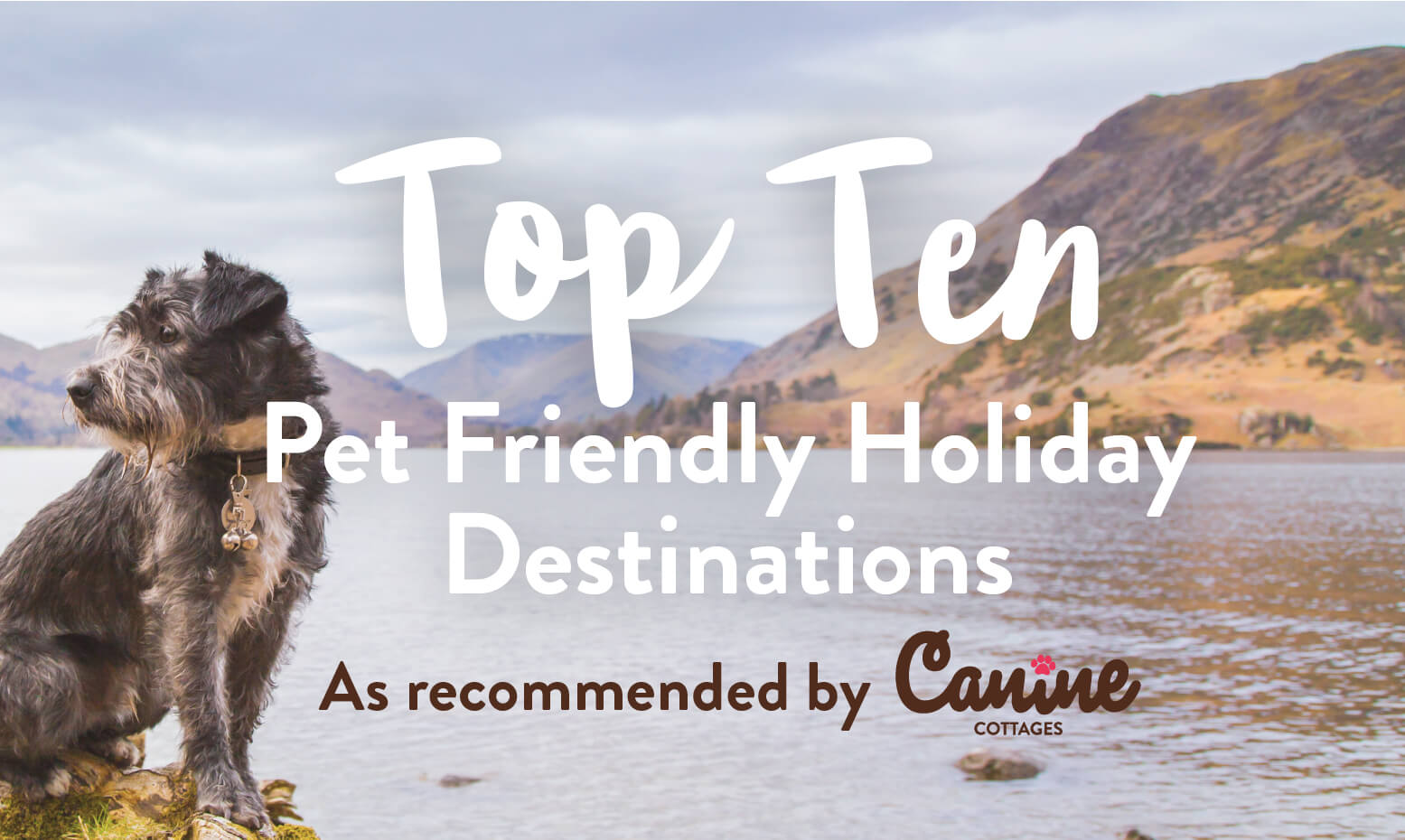 Top 10 Pet Friendly Holiday Destinations
