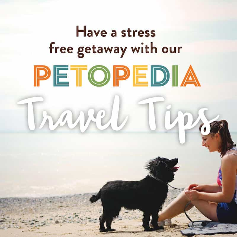 Have a Stress Free Getaway with our Petopedia Travel Tips.