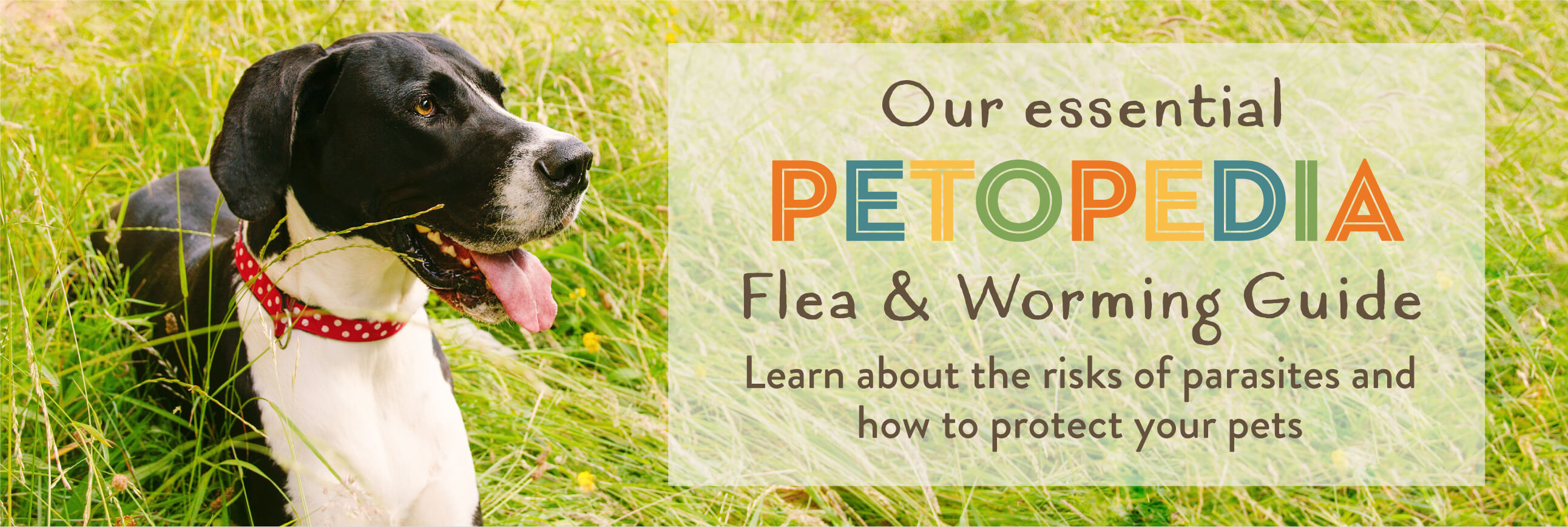 Our Essential Petopedia Flea & Worming Guide