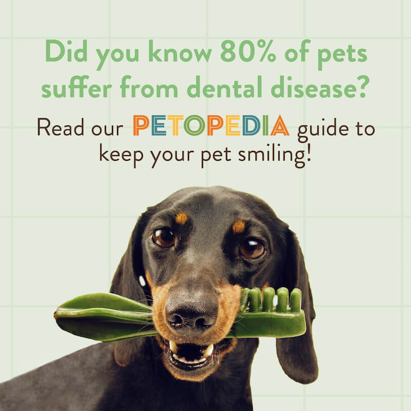 Did you know 80% of pets suffer from dental disease? Read our Petopedia guide to keep your pet smiling!