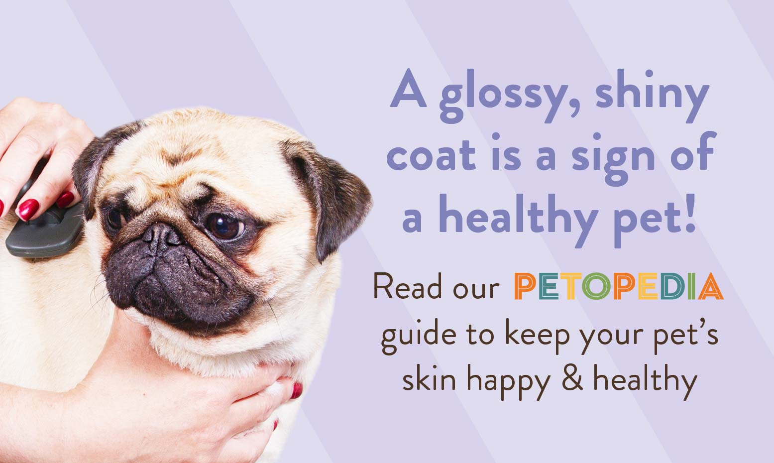 A glossy, shiny coat is a sign of a healthy pet! Read our PETOPEDIA guide to keep your pet's skin happy & healthy