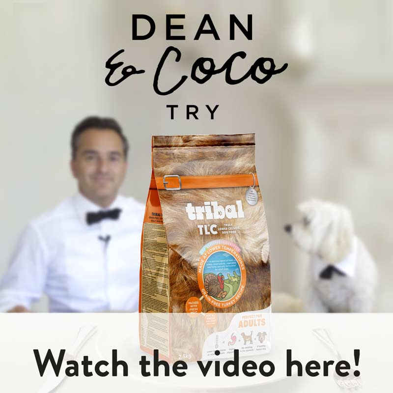 Dean & Coco try Tribal. Watch the video here!