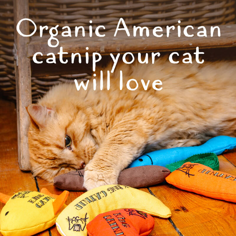 Organic catnip your cat will love