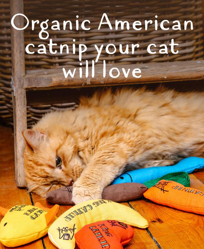 Organic catnip your cat will love