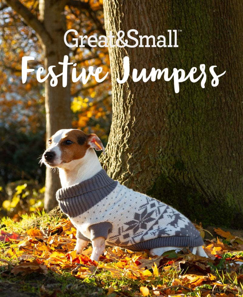 Great & Small Festive Jumpers