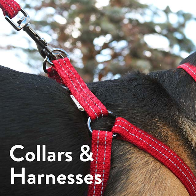 Collars and Harnesses