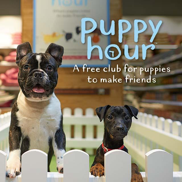 Puppy Hour