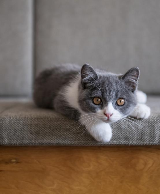 Caring for a new kitten at home?