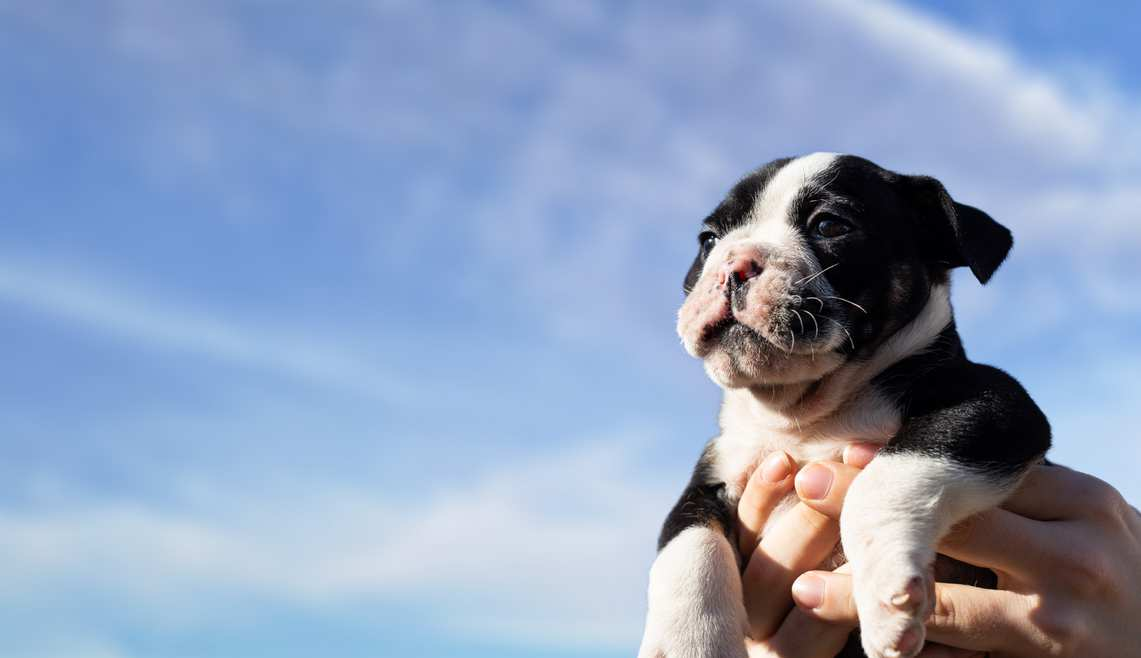 Hello World. Bring your new puppy into one of our stores for a socially distanced one-on-one advice session and a 10% discount. *Hello World discount in store only