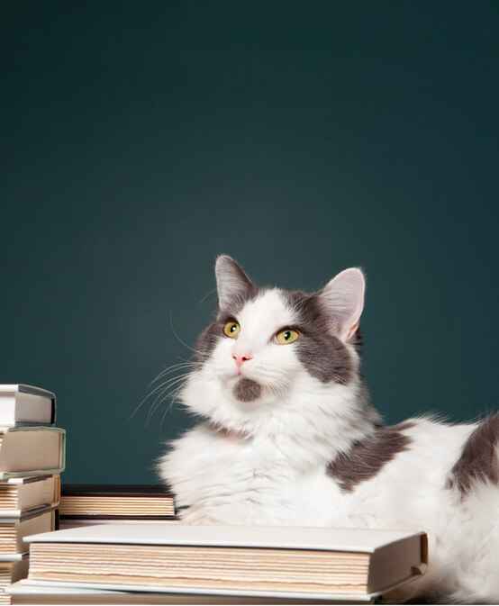 Petopedia. Brush up on your pet knowledge with our handy guides