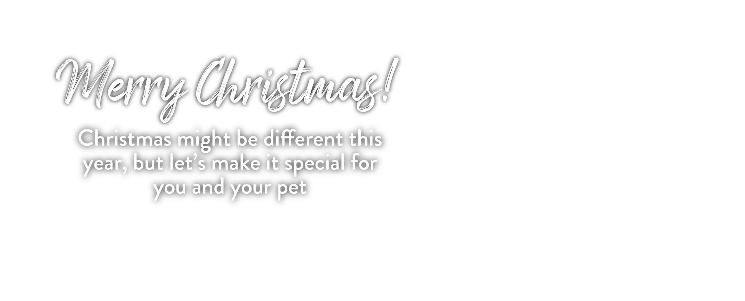 Merry Christmas! Christmas might be different this year, but let's make it special for you and your pet