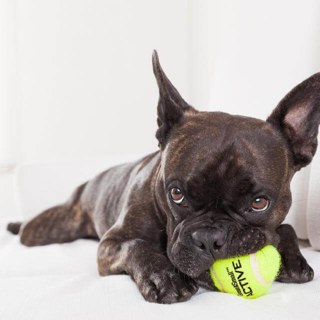 Active Toys. Keep dog active this spring!